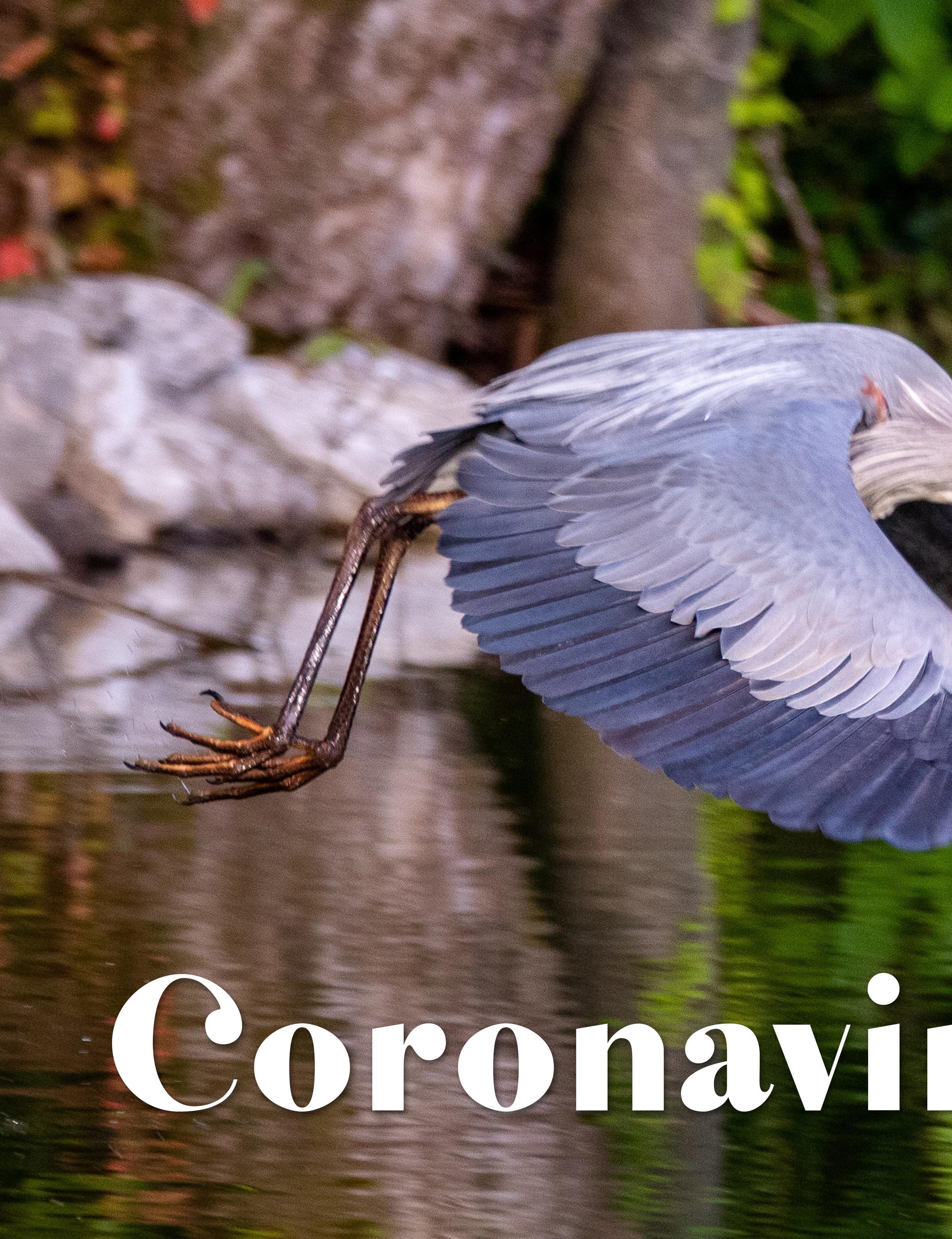 Page 26 of Coronavirus & Me