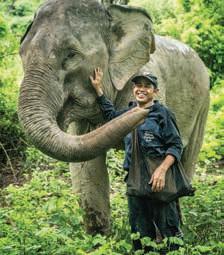 Page 38 of Les Cannois sont formidables– La Cannoise Wendy Legatt au secours des éléphants du Laos
