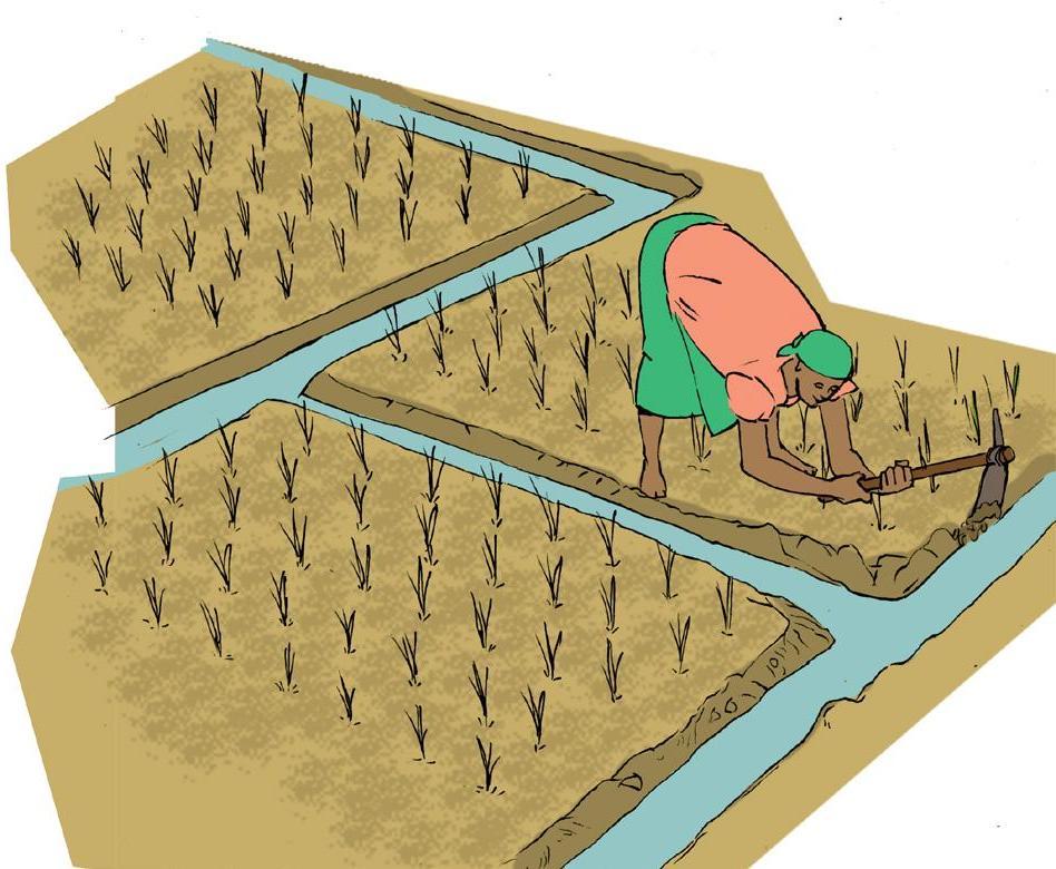 Page 46 of Pratique n°1 Le système de riziculture intensive sri