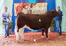 story from: 2020 October Shorthorn Country
