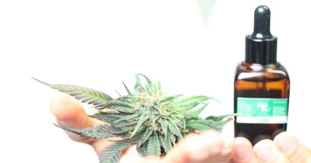Page 15 of Use of Cannabis Prior to Bodily Trauma Limits Damage and Increases Recovery