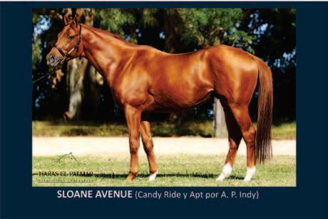 Page 12 of SLOANE AVENUE (Candy Ride y Apt por A. P. Indy