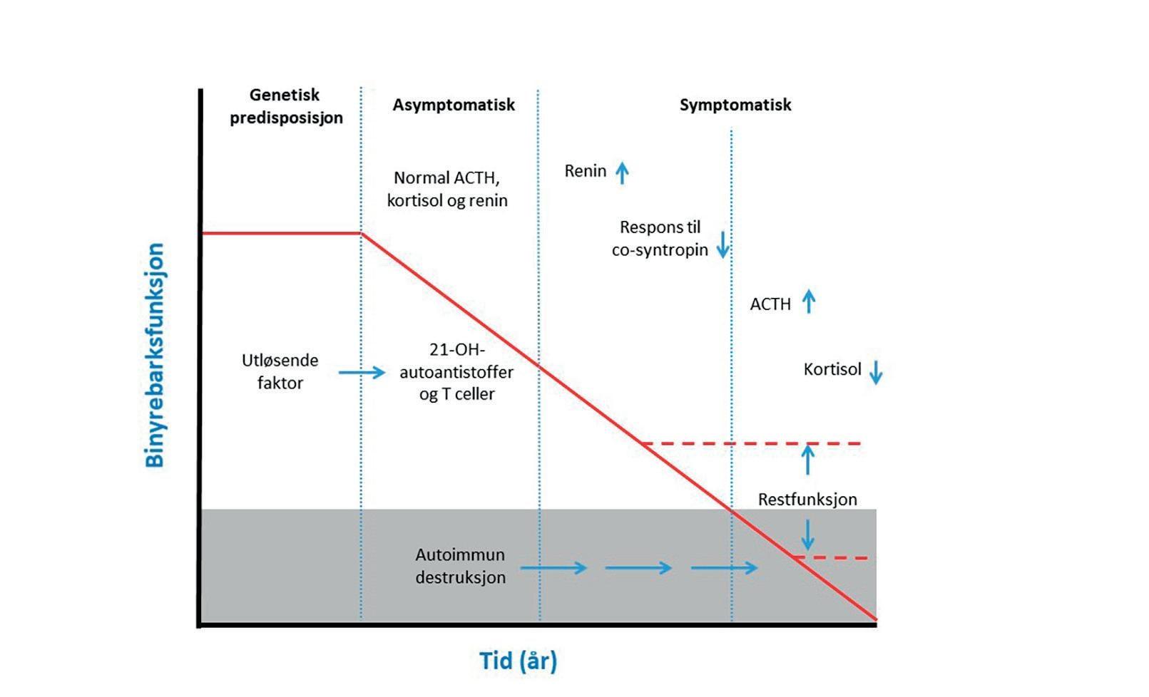 Page 14 of Restproduksjon av binyrebarkhormon ved autoimmun Addisons sykdom ervanlig