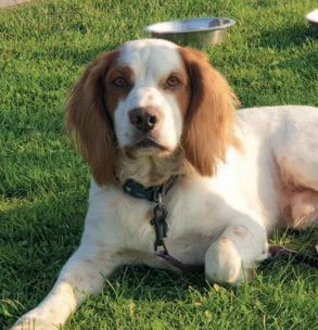 Page 45 of The Spaniel Diaries: The continuing adventures of Billy