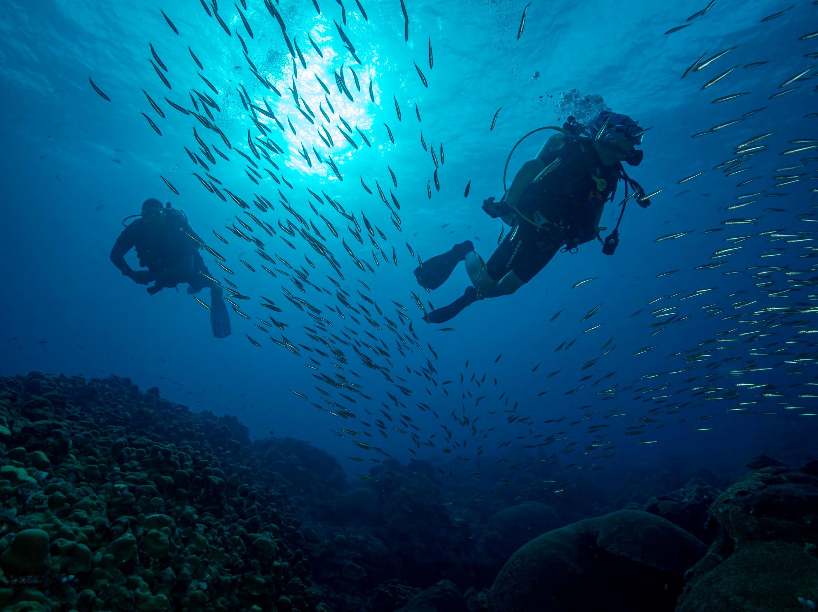 Page 28 of Снег наоборот. Размножение кораллов в Месиканском заливе. Беата Лерман