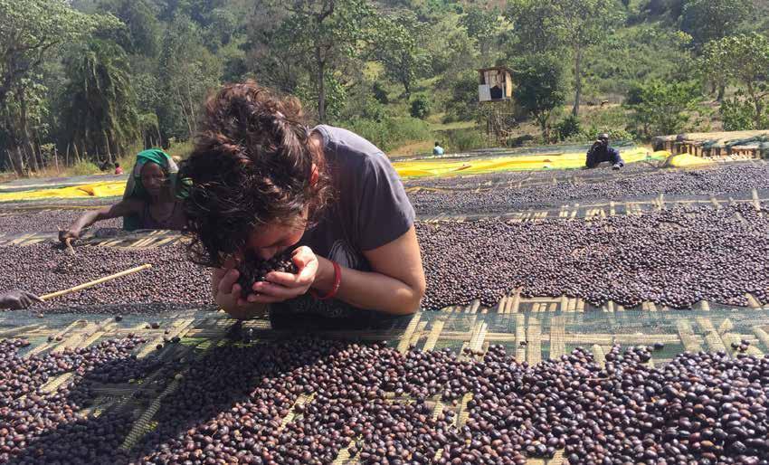 Page 28 of Koffiebranders met een boon voor direct trade