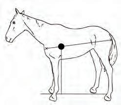 Page 36 of The Polo Horse