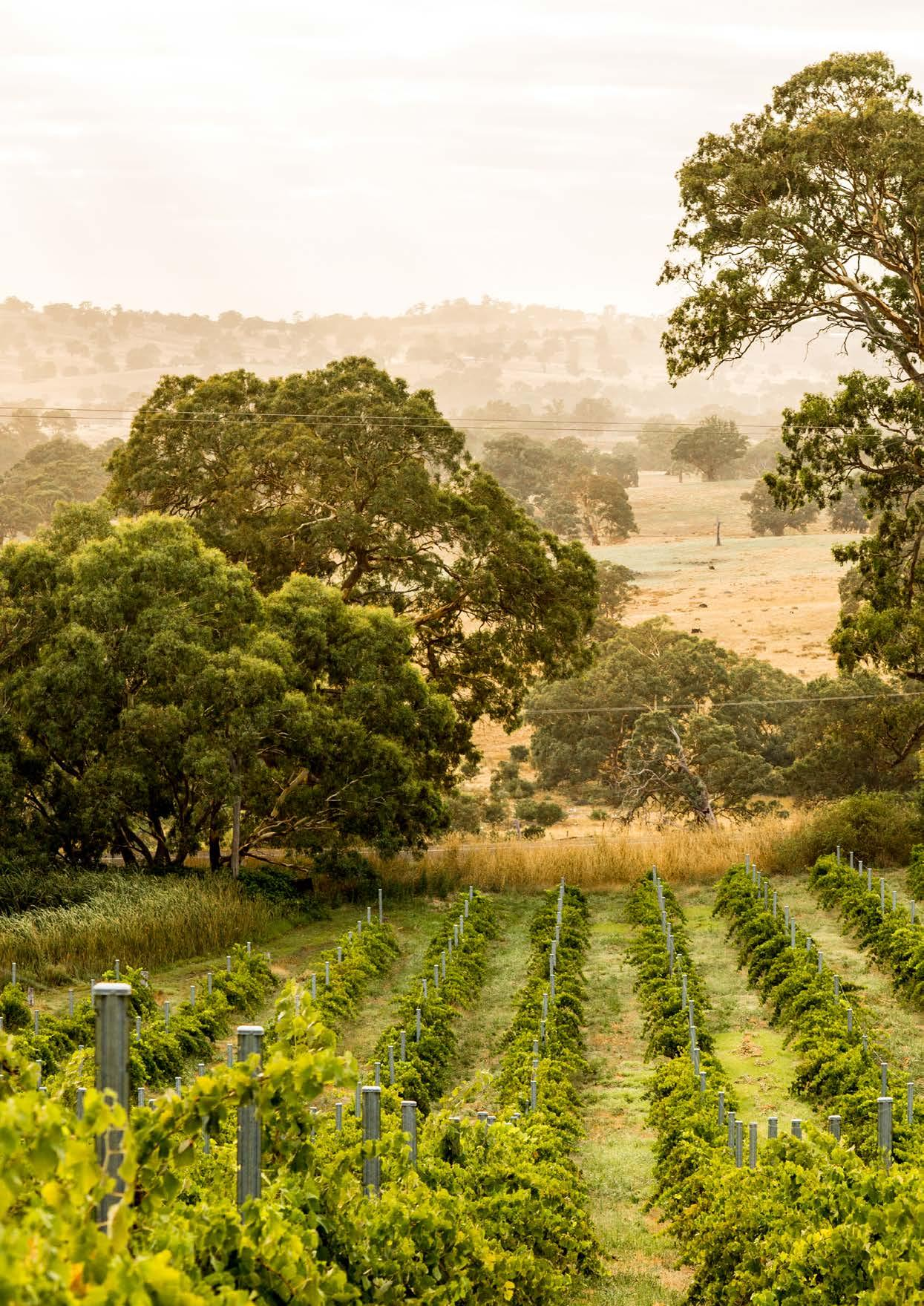 Page 16 of EXPLORING THE BAROSSA WITH RINGLAND