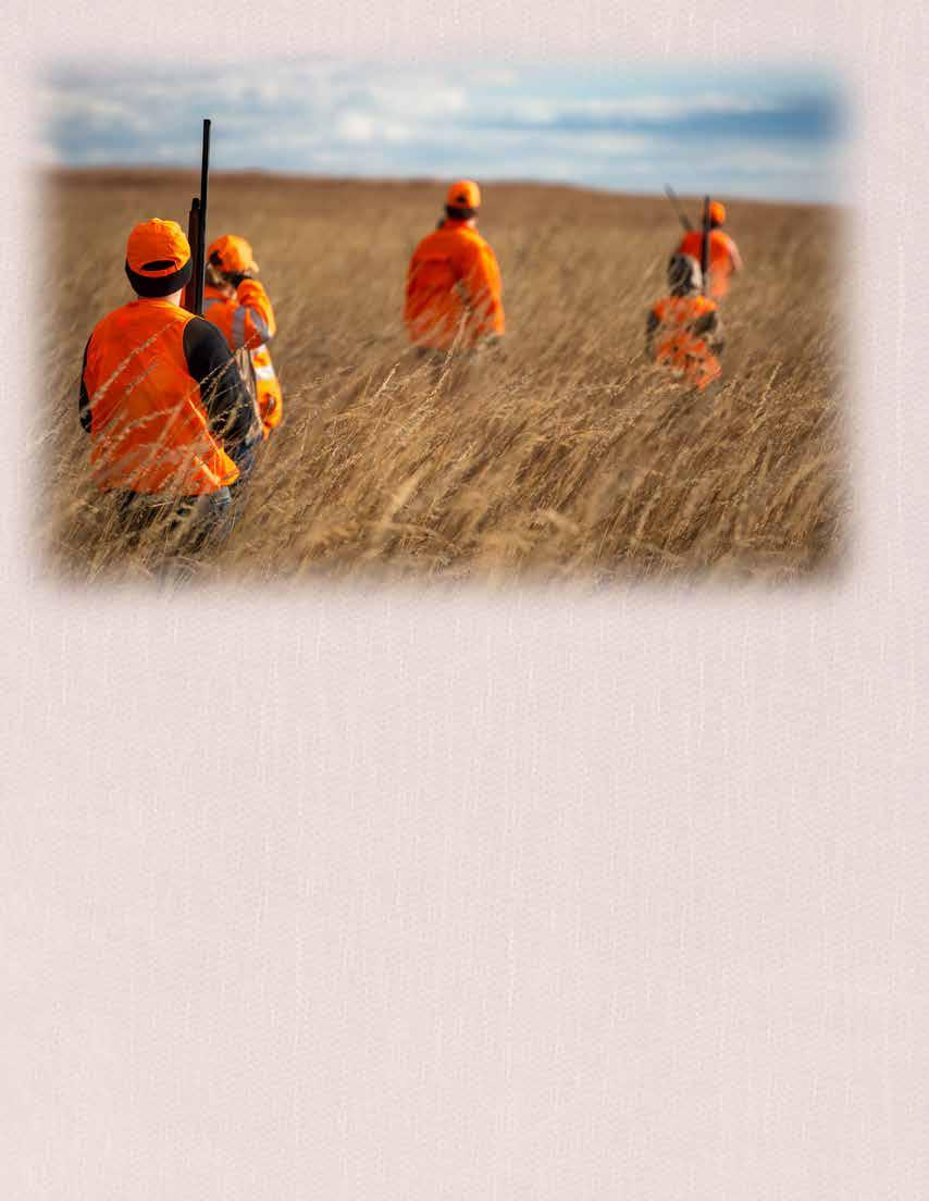 Page 8 of Pheasants & Quail in the Sights