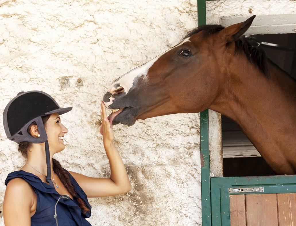 Page 22 of HORSE&LAW: IL MANTENIMENTO E IL TRASPORTO DEL CAVALLO