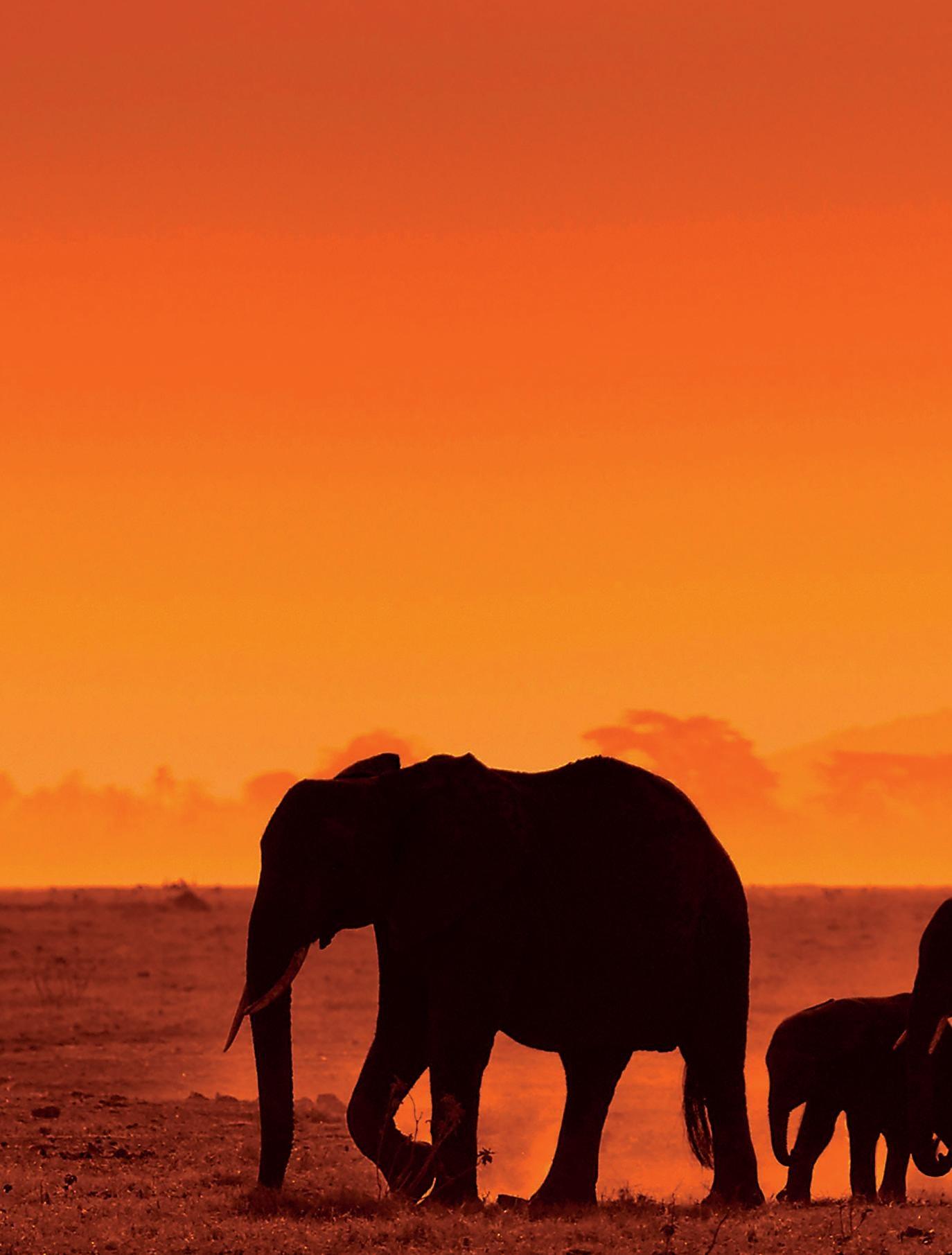 Page 22 of Kenia: Entre los safaris y las playas del Índico