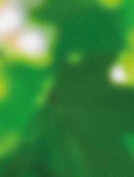 Page 106 of Спецпроект «Точка доступа, связи, зрения. Что фестиваль освоил в 2020-м и что его ждет в 2020-х» / Ольга Тараканова