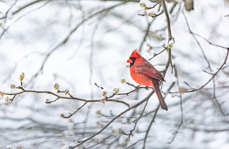 Page 16 of Winter Birding