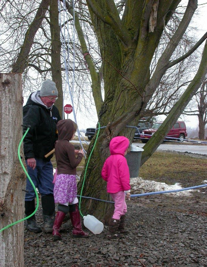 Page 23 of We're No. 2: Maple Sugaring in New York