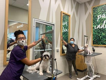 Page 16 of How Petco is Helping Protect People and Pets at Their Salons