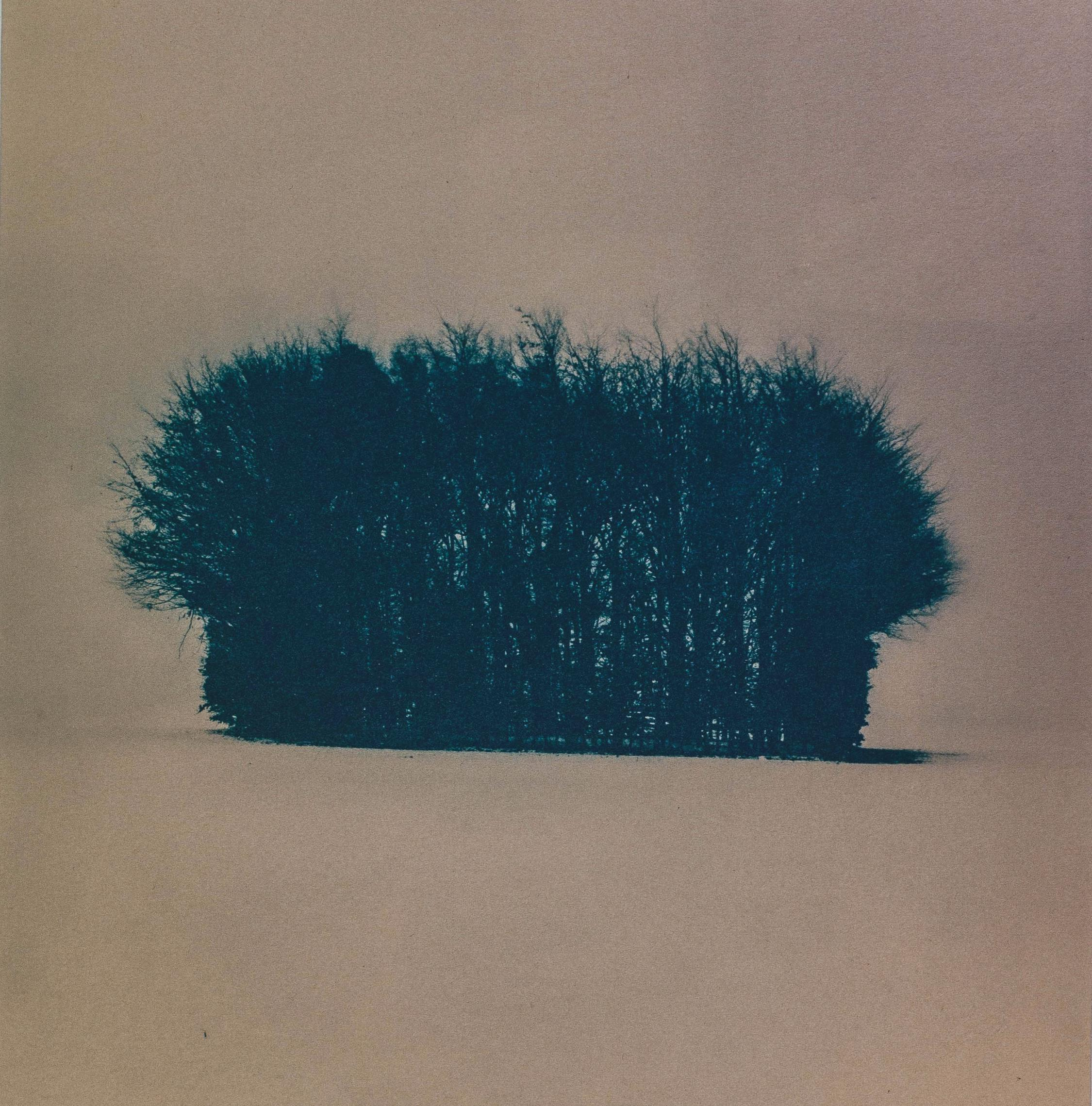 Page 4 of Cyanotype Charles Binns guides us through this rewarding but simple alternative process and explains how he made an ultra violet exposure unit