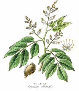 Page 176 of Copaiba Oil