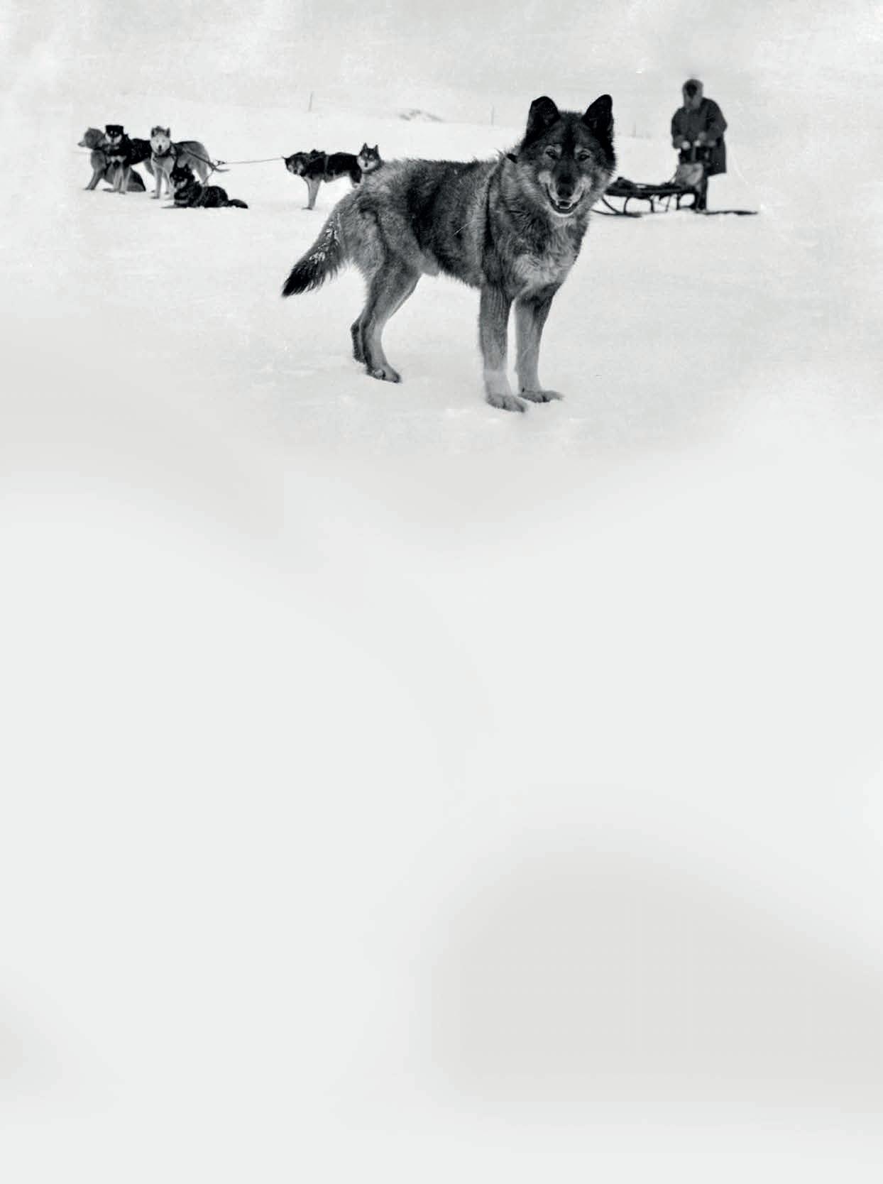 Page 76 of Die sieben mutigsten Hunde der Welt