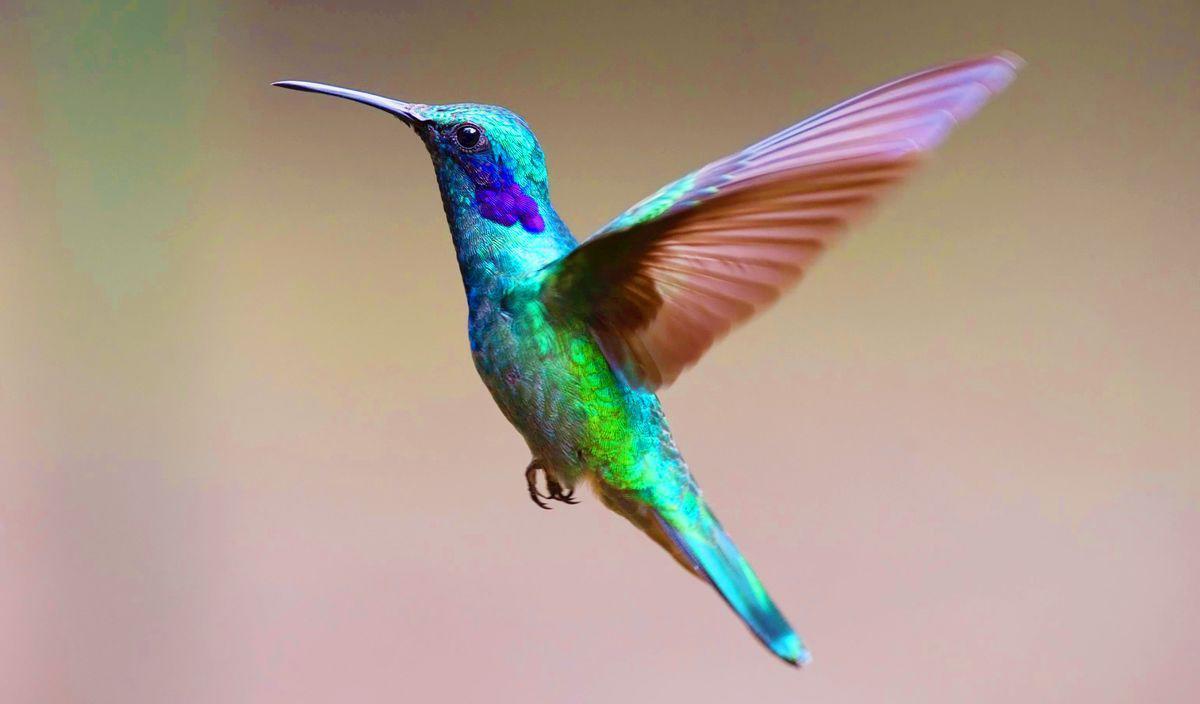 Page 24 of Conocer para amar y cuidar a los colibríes