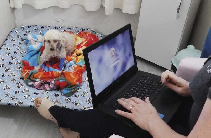 Page 20 of #inovação No Centro Médico Veterinário Humanitare o tutor pode acompanhar o pet na internação