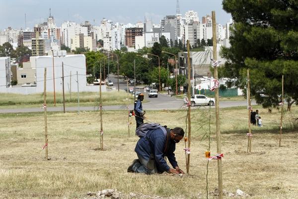 Page 36 of Profertil donará 500 árboles para el nuevo parque de la ciudad