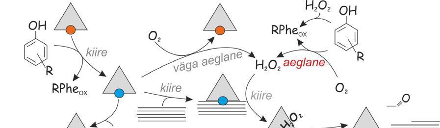Page 12 of Tõrksate polüsahhariidide ensümaatiline lagundamine – kiirust piirav etapp ning selle sõltuvus substraadi iseloomust ja sünergistlikest komponentidest