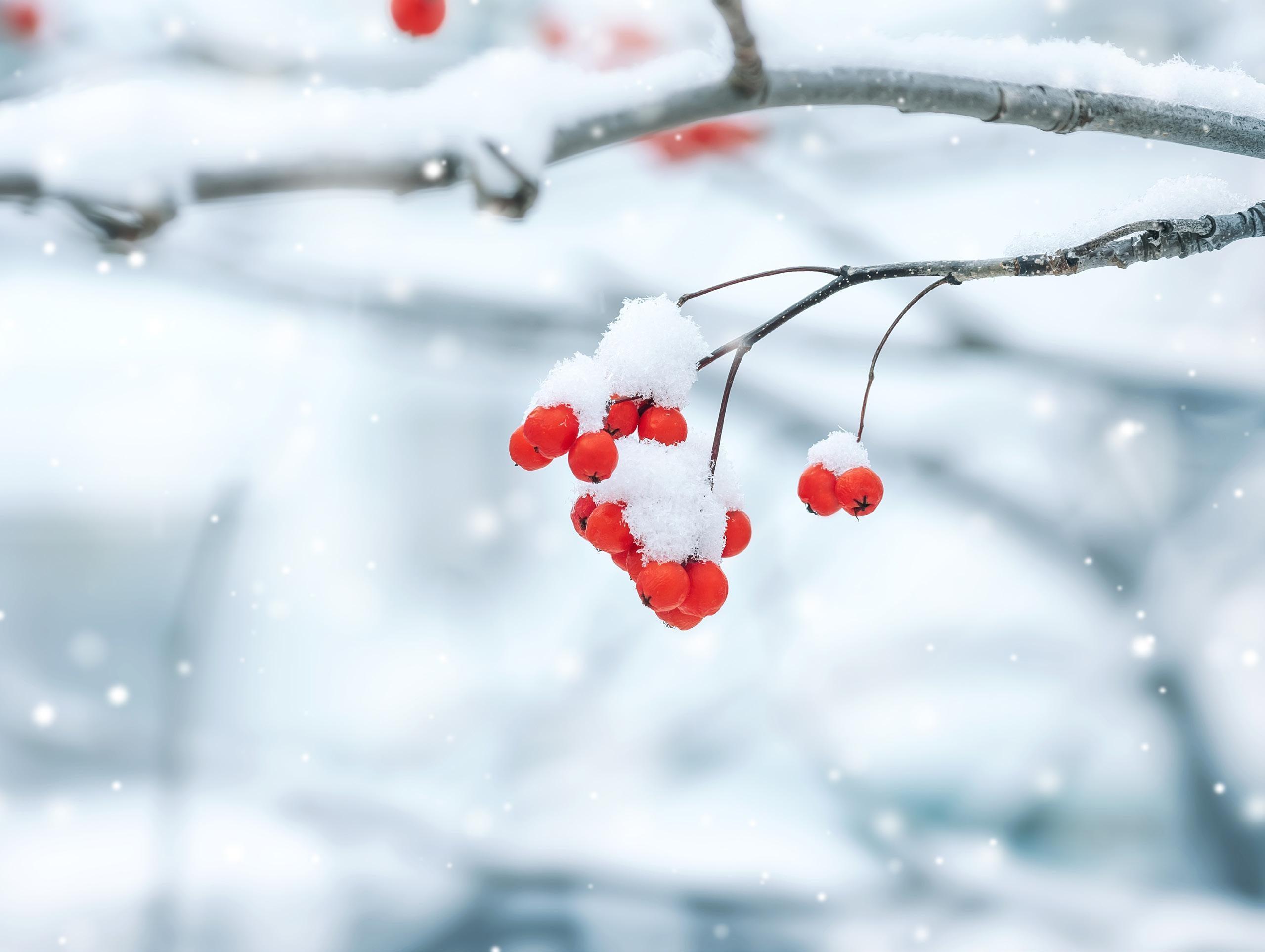 Read story: Thoreau in Winter