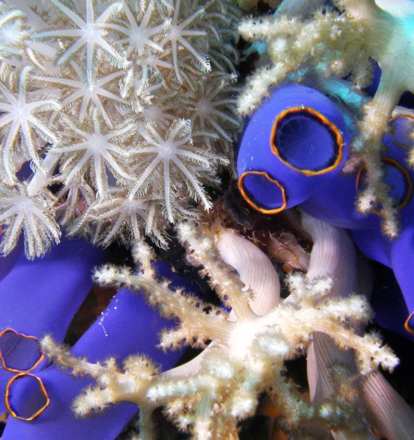 Page 52 of Molecular Ecology Of The Marine Bentos