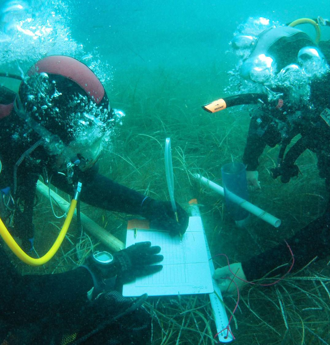 Page 84 of Group Of Aquatic Macrophyte Ecology (Game