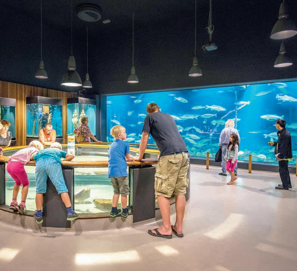 Page 32 of Museum / Das Fischerei- und Seefahrtsmuseum