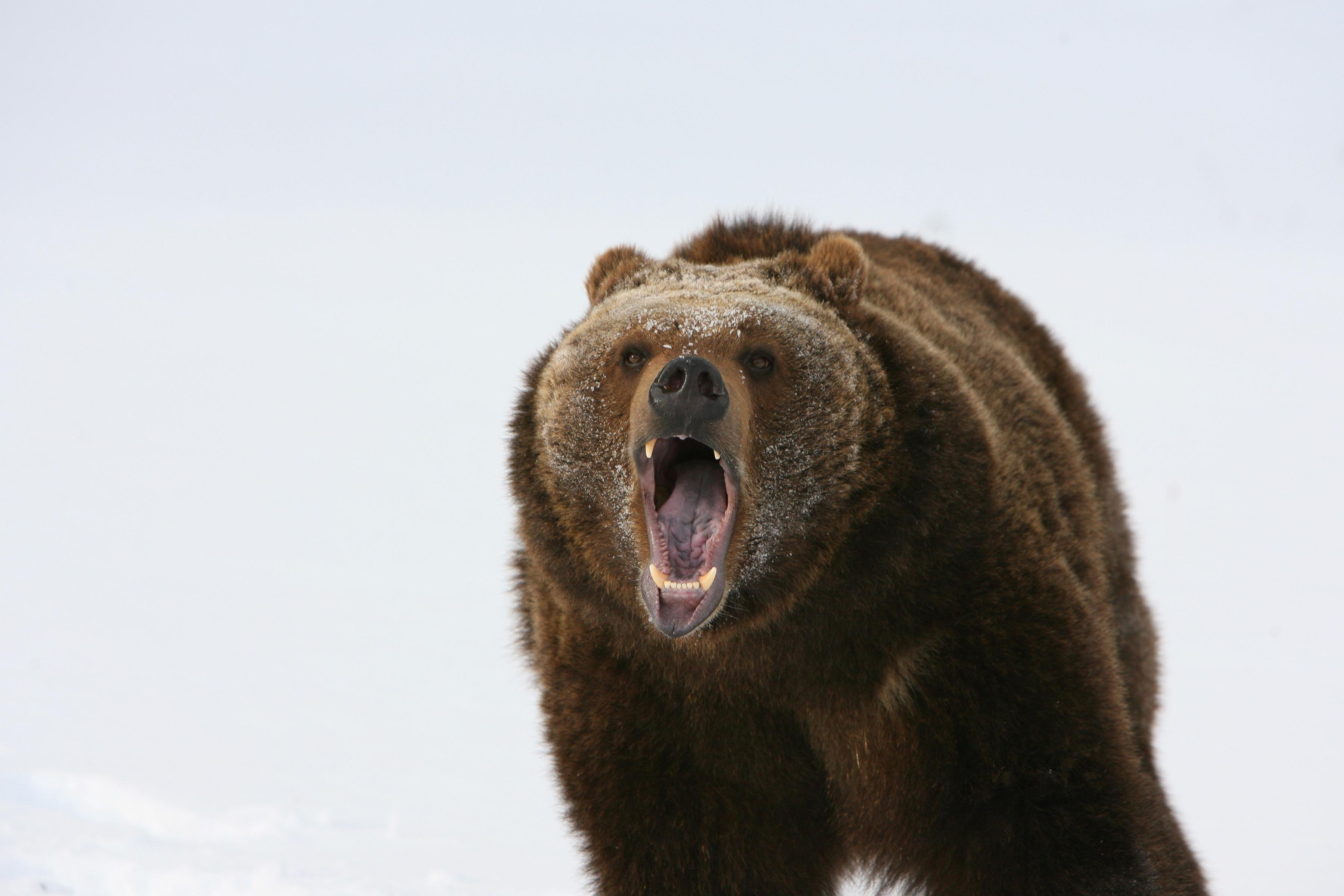 Page 6 of What should you do if you encounter a wild animal on the trail? Part three: Bears