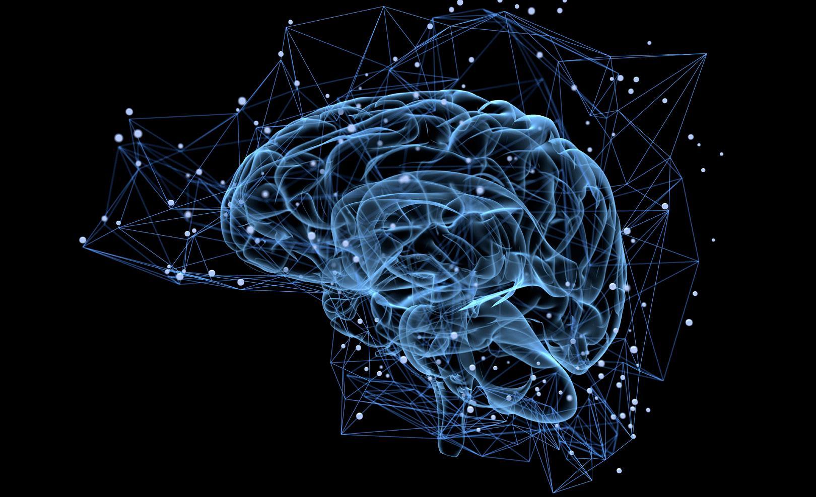 Page 18 of El cerebro y cómo funciona el sistema nervioso
