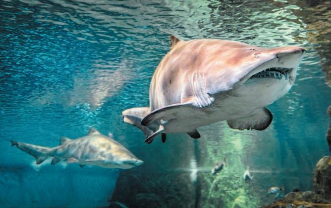Page 26 of Aquarium Costa de Almería