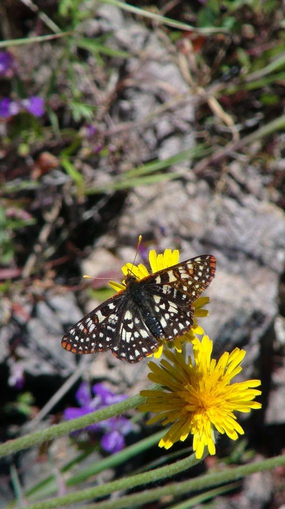 Page 66 of Central California Nature Trips