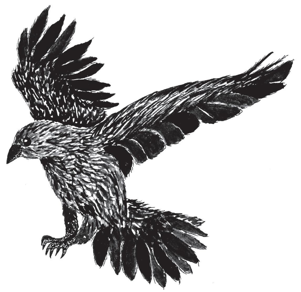 Page 30 of Bird watch - meet Ramsgate's ravens