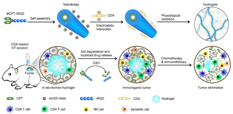 Page 6 of Self-Assembling Hydrogel for Better Cancer Immunotherapy
