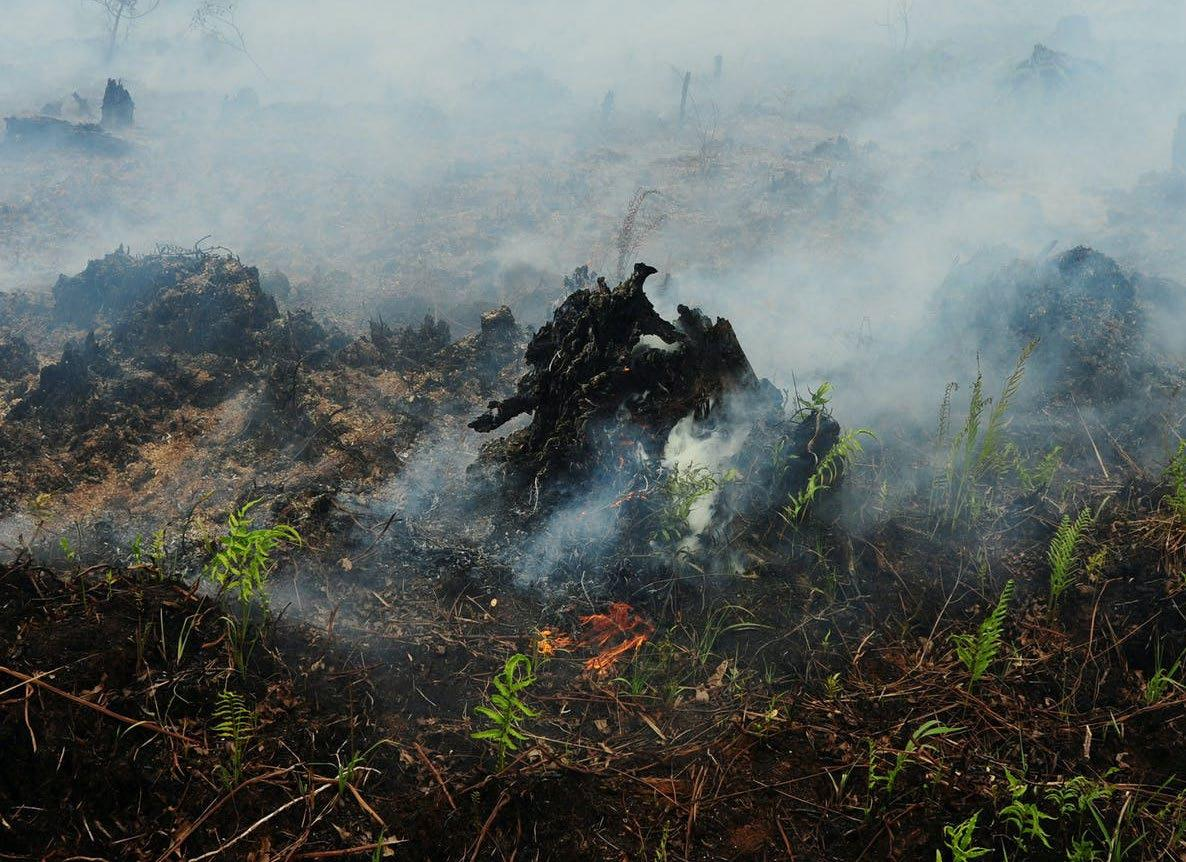Page 37 of Low-severity fires enhance long-term carbon