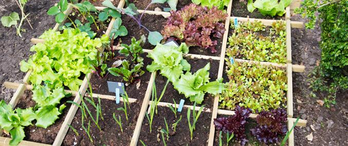 Page 10 of Designing Your Own Vegetable Garden