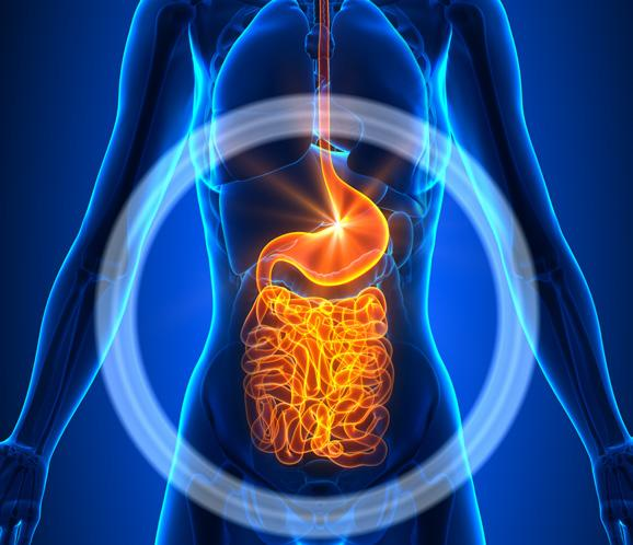 Page 30 of Probiotics and Prebiotics: Supplements for Your Gut and Overall Health