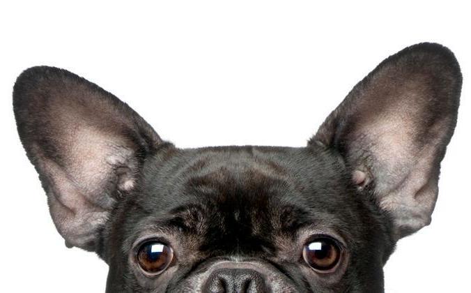 Page 52 of Dogs vs. Cats: Decoding Your Pets' Secret Language