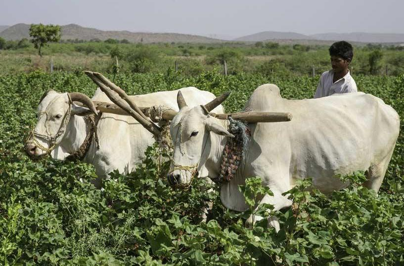 Page 30 of Indian farming protests resonate US agriculture