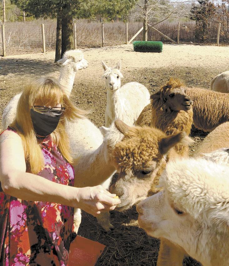 Page 14 of Adorable alpacas