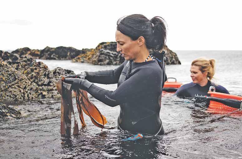 Page 3 of Taregründere i Lofoten Seaweed: Høster fra havets åker