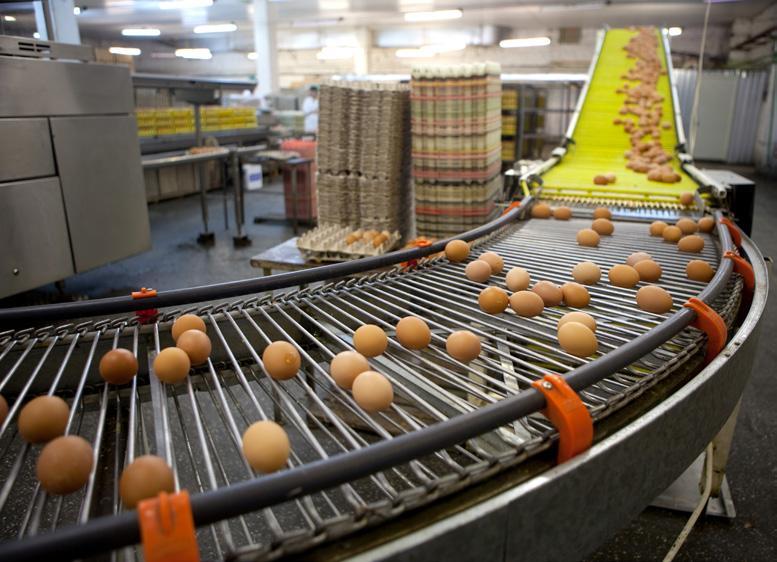 Page 18 of Evonik Como mitigarmos o impacto dos altos custos de produção sobre a cadeia de produção de ovos?