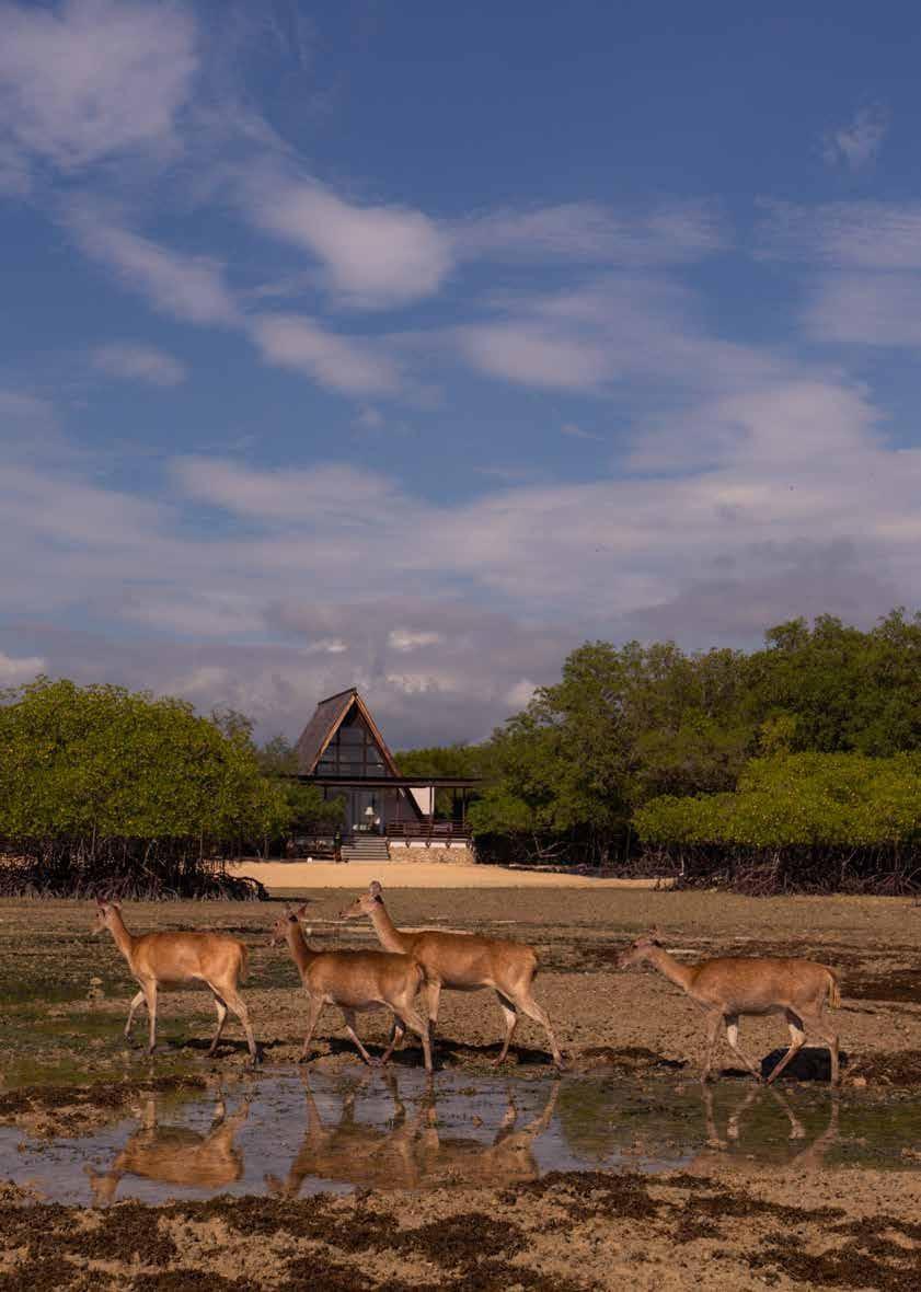 Page 6 of Destination: Plataran Ecotourism