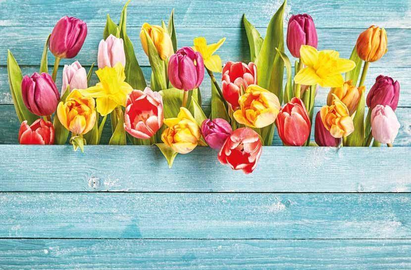 Page 6 of Frühlingsbräuche Vom Aprilscherz bis zum Maitanz