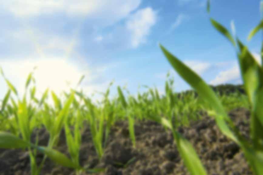 Page 3 of Intenzív búzafajtákhoz hatékony növényvédelmi technológia
