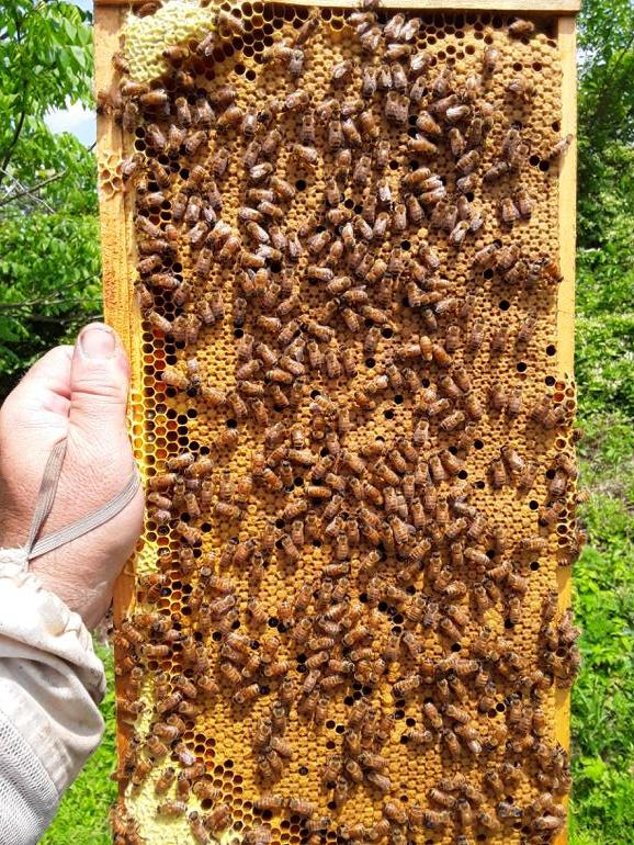 Page 54 of Bee Keeping