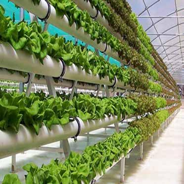 Page 4 of Research Trends Increase on Greenhouse Technology for Sustainability