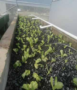 Page 18 of INMeD: First aquaponics social enterprise launched